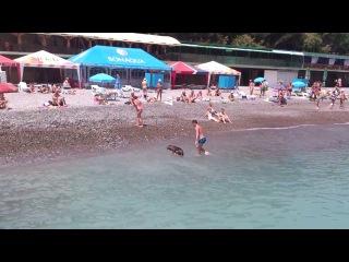 Собака ныряет с людьми.